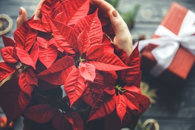 Junior/Senior Prom Poinsettia and Wreath Fundraiser